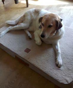 Ortopædisk hundeseng